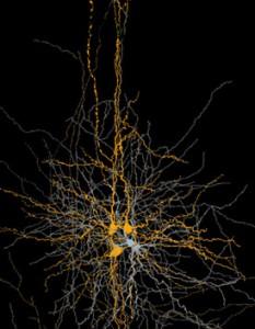 פילטרים של המוח. כאב